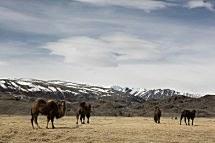 Зимнее приключение в Монголии